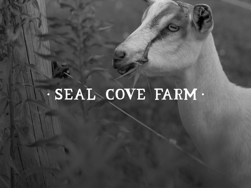 DAY 9 - SEAL COVE FARM