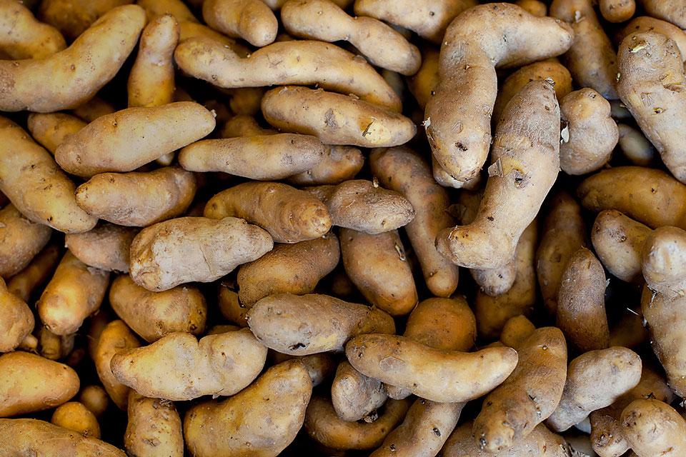 updated-3-loveleaf-co-maine-picnic-beech-hill-potatoes.jpg