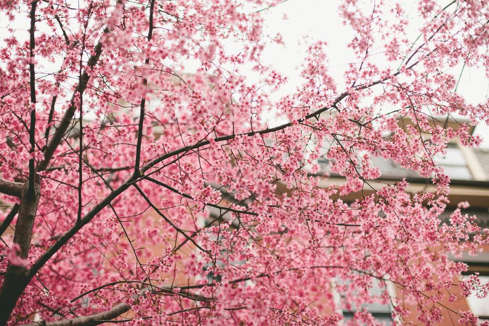Boston_Boquet_26.jpg