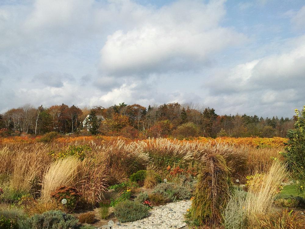 Gardens and Salt Marsh Peaks Island.jpg