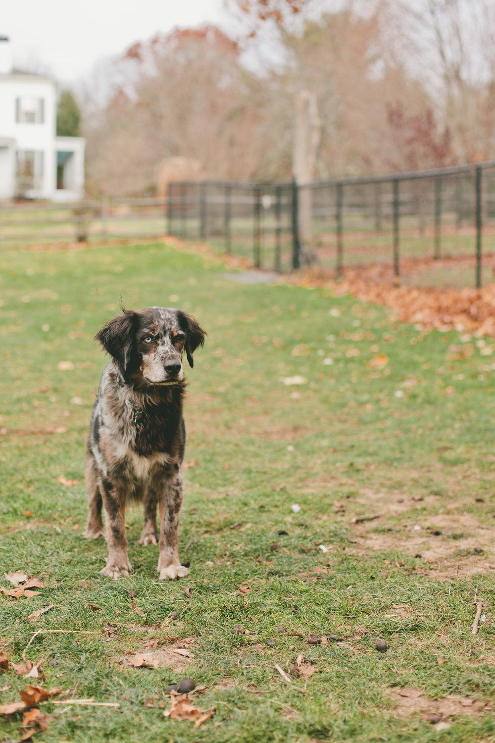 Schultzs Guest House A Sanctuary For Homeless Dogs Tell New England