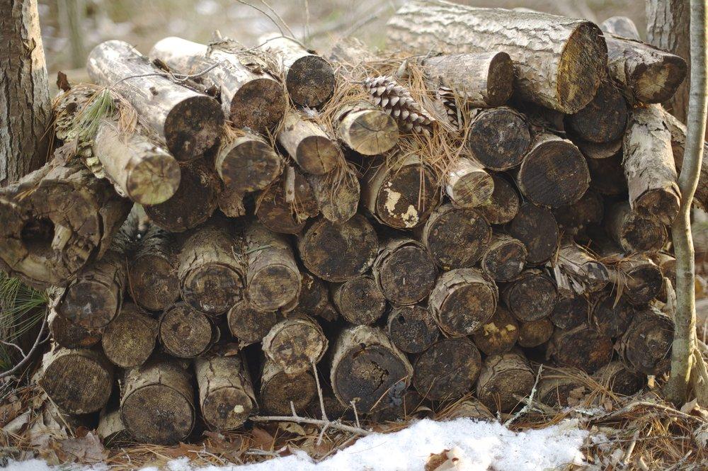 old woodpile TELL.jpg