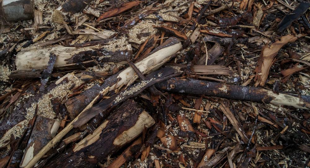 Jess Beer - Wood Pile .jpg