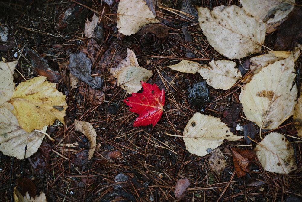 Autumn-2016-5.jpg