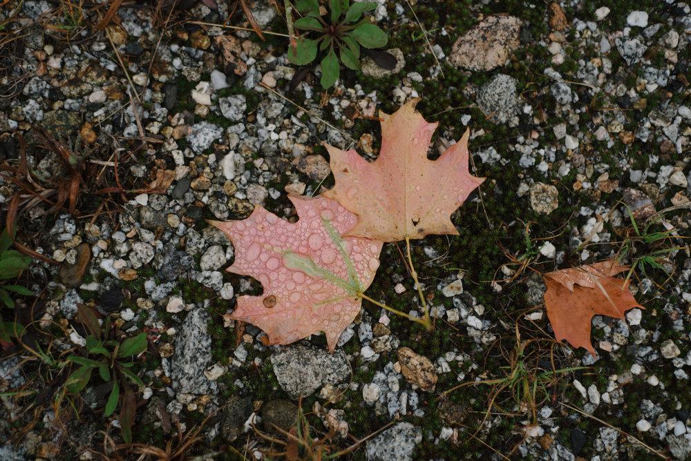 Autumn-2016-15.jpg