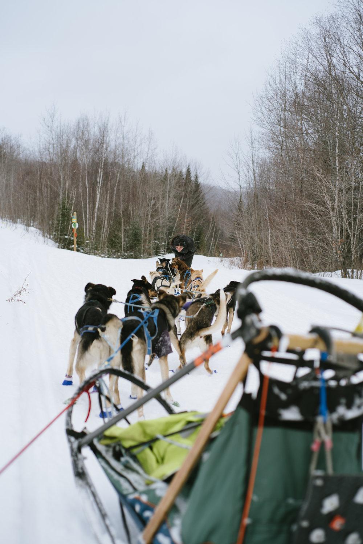 Meet The Local Sally Manikian Shady Pines Sled Dog Team Snow Hd Wiring Harness Shadypines 30