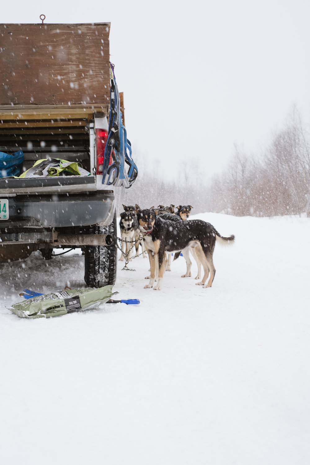 Meet The Local Sally Manikian Shady Pines Sled Dog Team Snow Hd Wiring Harness Shadypines 9