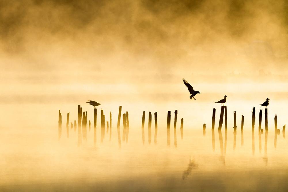 Un matin sur Sanguinet © Marc C.jpg
