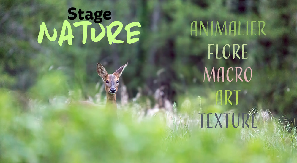stage photo nature.jpg