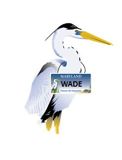 Last year voters chose the name Wade for the Trust's blue heron mascot!