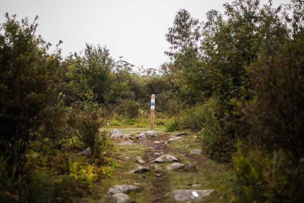 Appalachian Trail | Grayson Highlands, VA