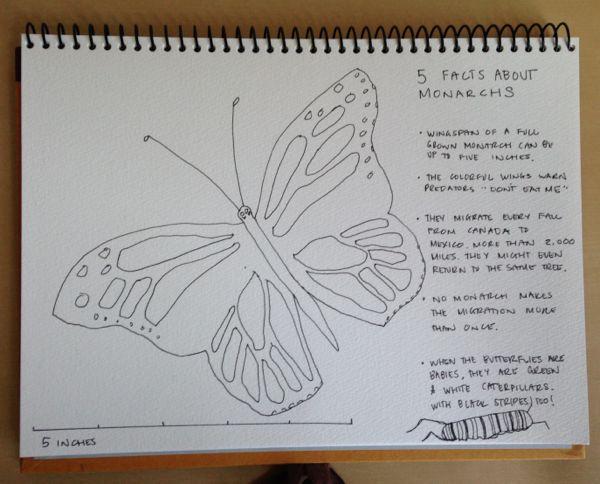 butterfly_sketch