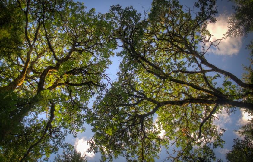 Oak Tree Content Block @ Bottom.jpg