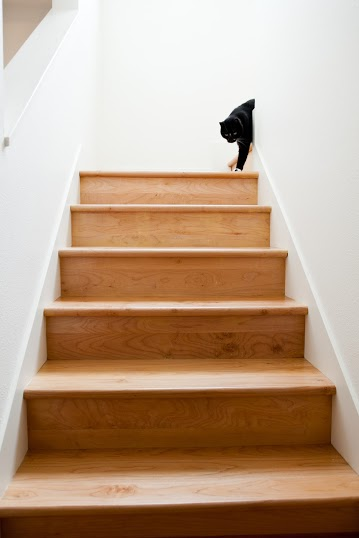 A cat walks down this maple stairway.