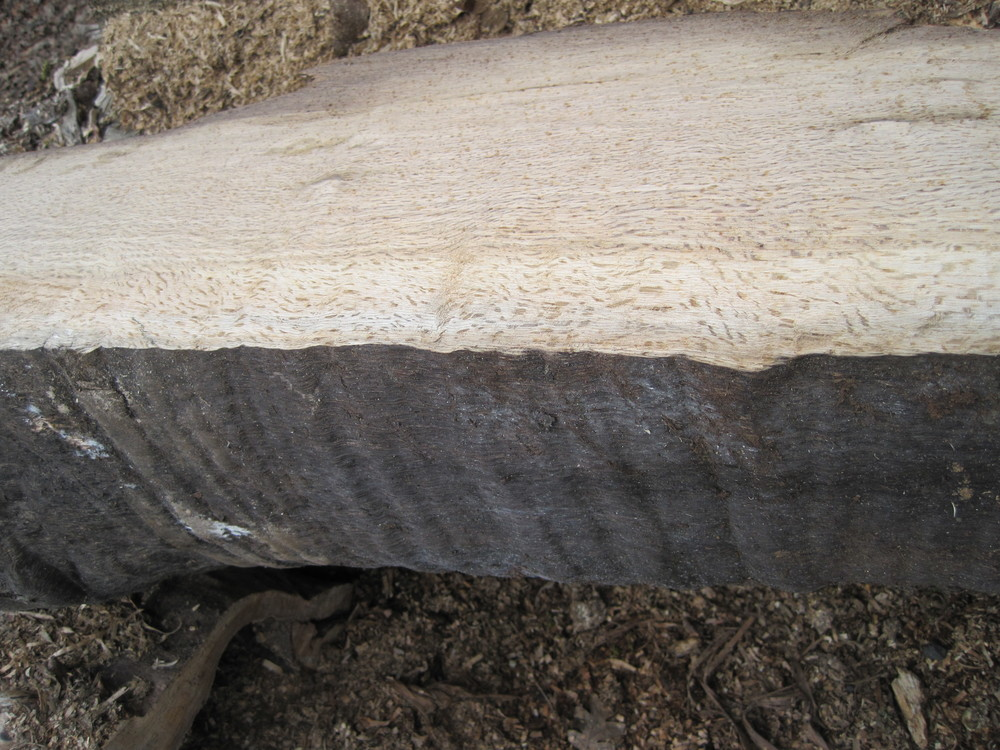 Rippled Oak Log