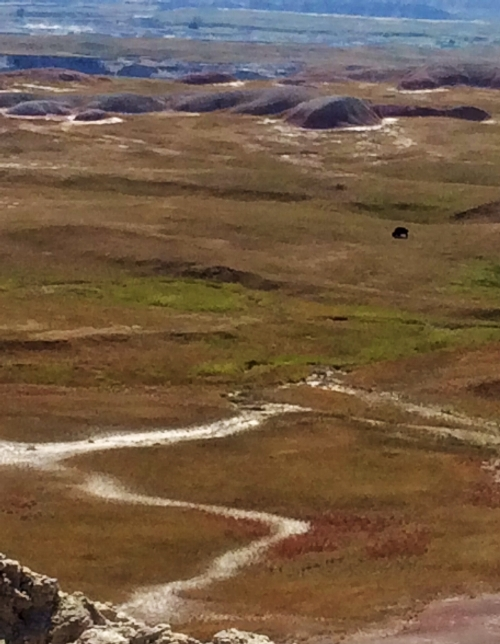 Big land-Big animals