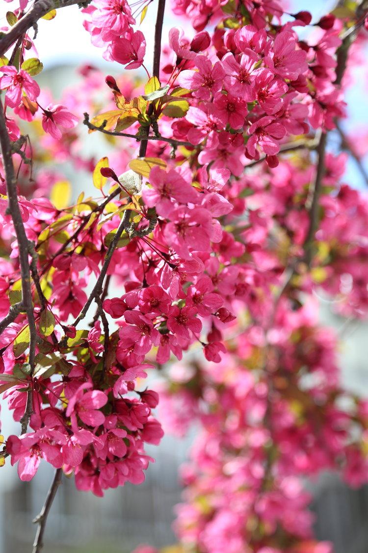 Spring on San Juan Island  Lisette Wolter-McKinley
