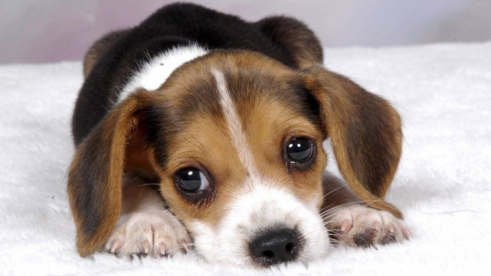 Nobody wants to see a pupae photo, so here's a puppy instead. You're welcome.