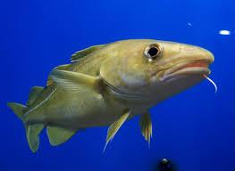 Definitely a fish.