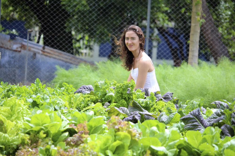 organic_farm_nicaragua
