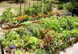 food garden.jpg