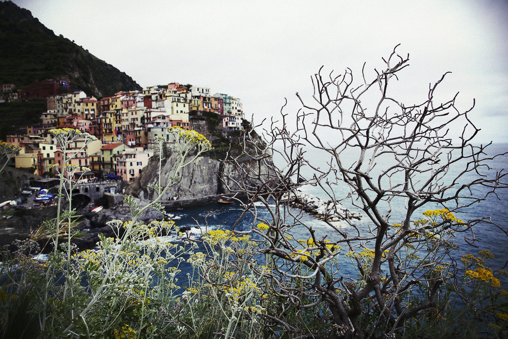 Manarola and Tree 2 Colour.jpg