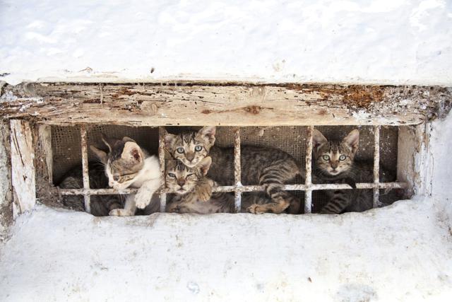 Four Kittens 2.jpg