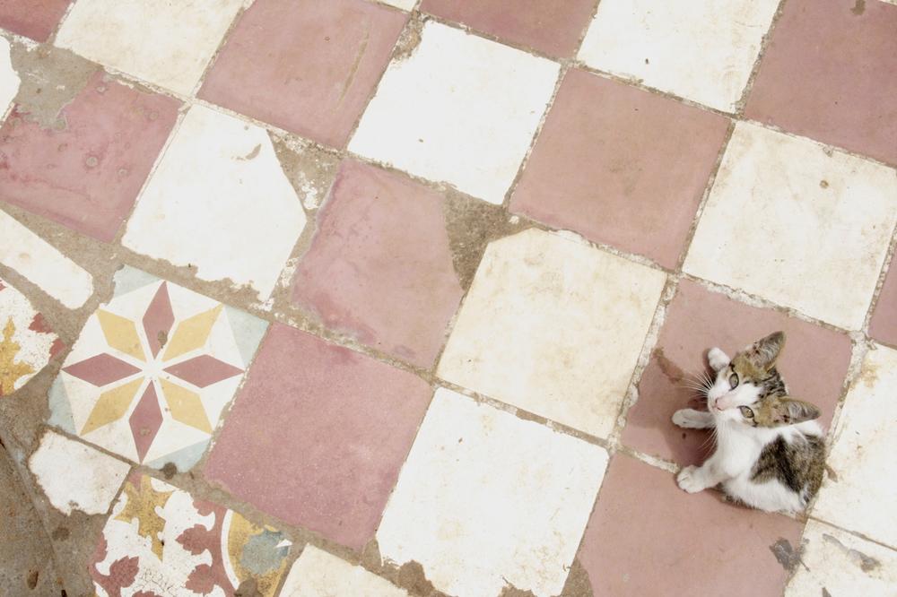 Cambodian Cat.jpg