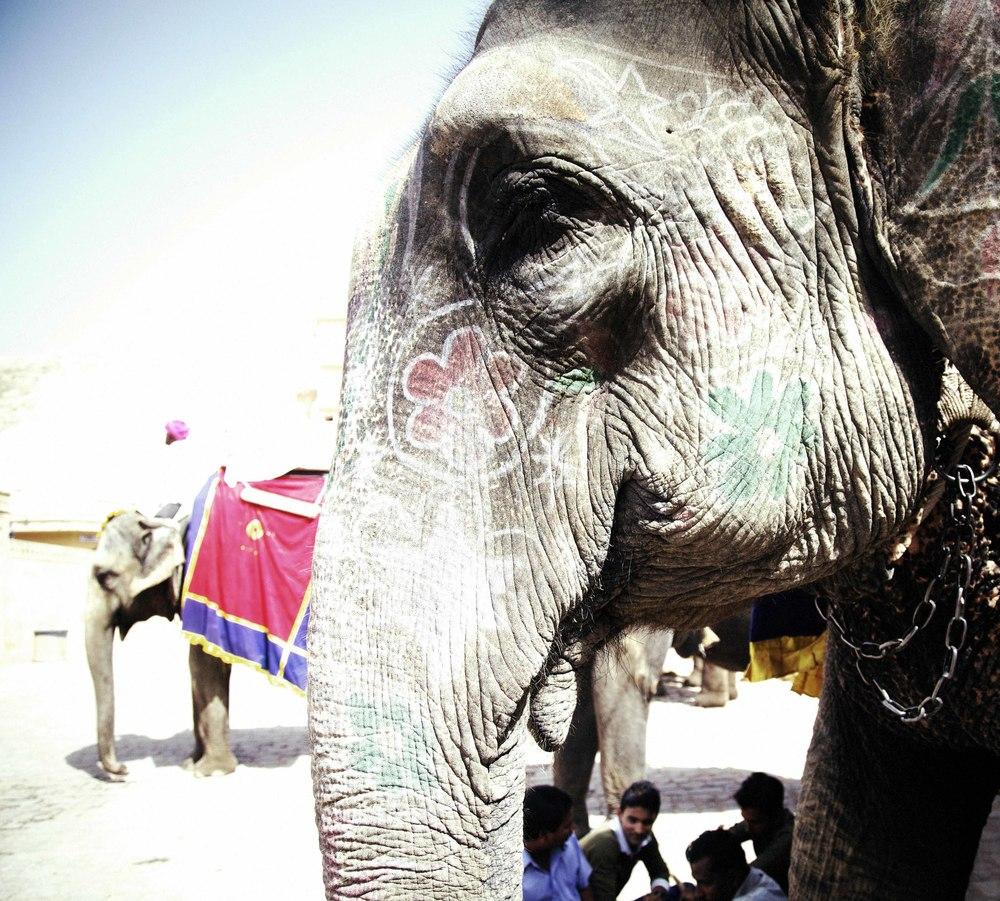 double elephant35.jpg