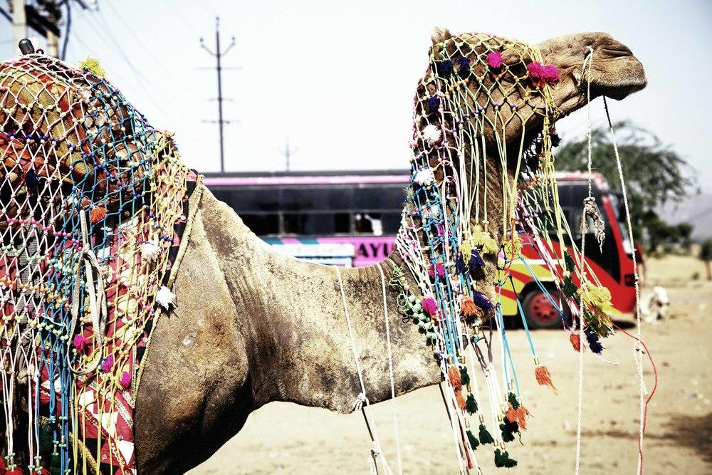 camel n bus 221.jpg