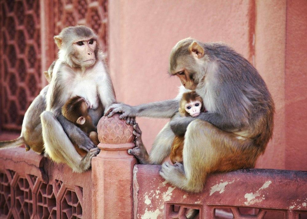 monkey family62.jpg