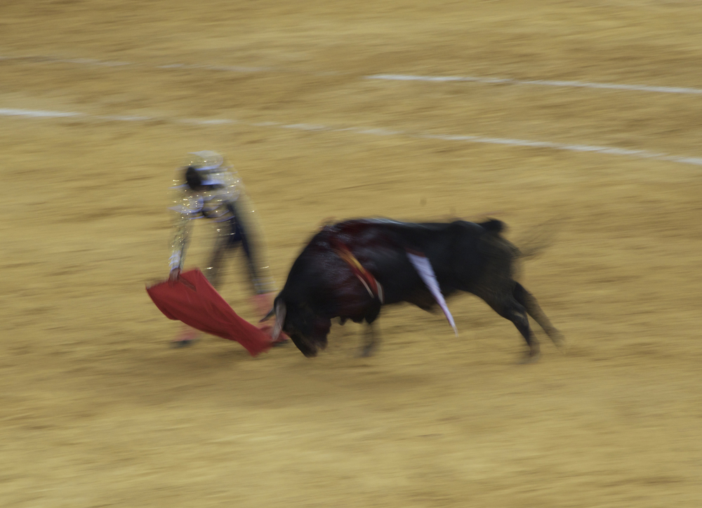 nikon bullfight 9 copy.jpg