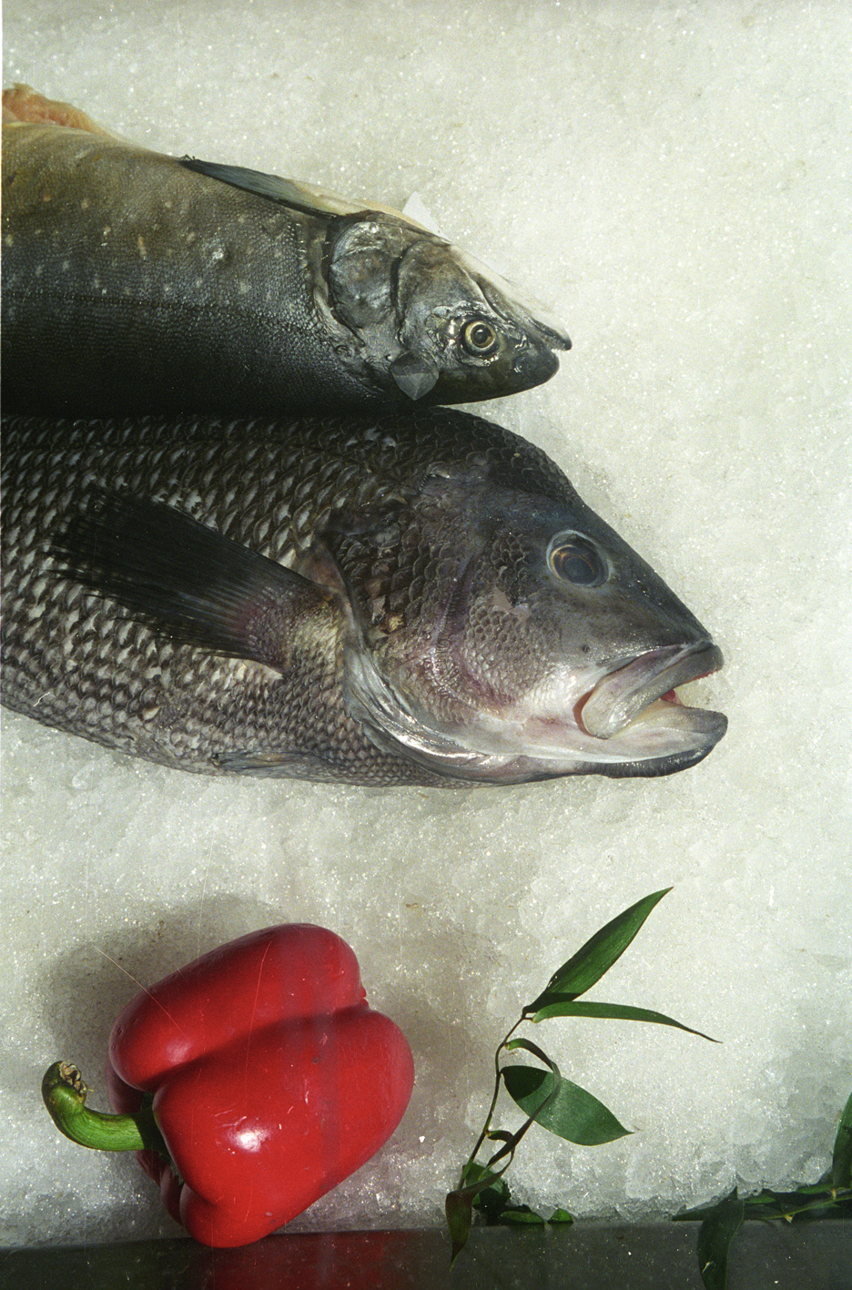 FishandPepper.jpg
