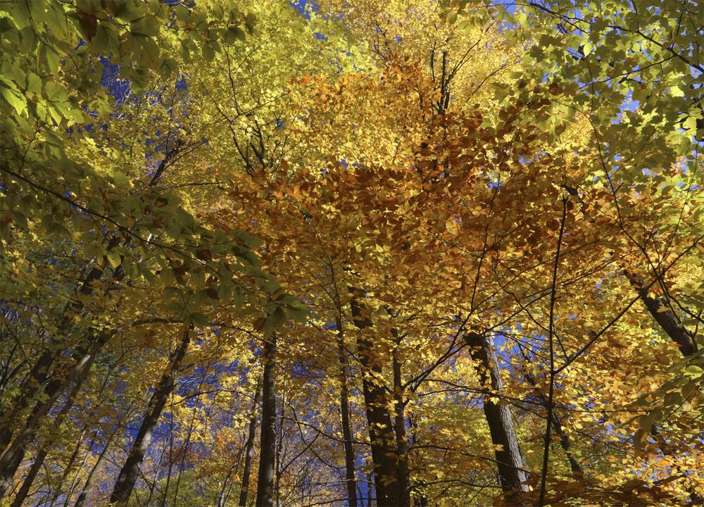 Trees 6466*.jpg