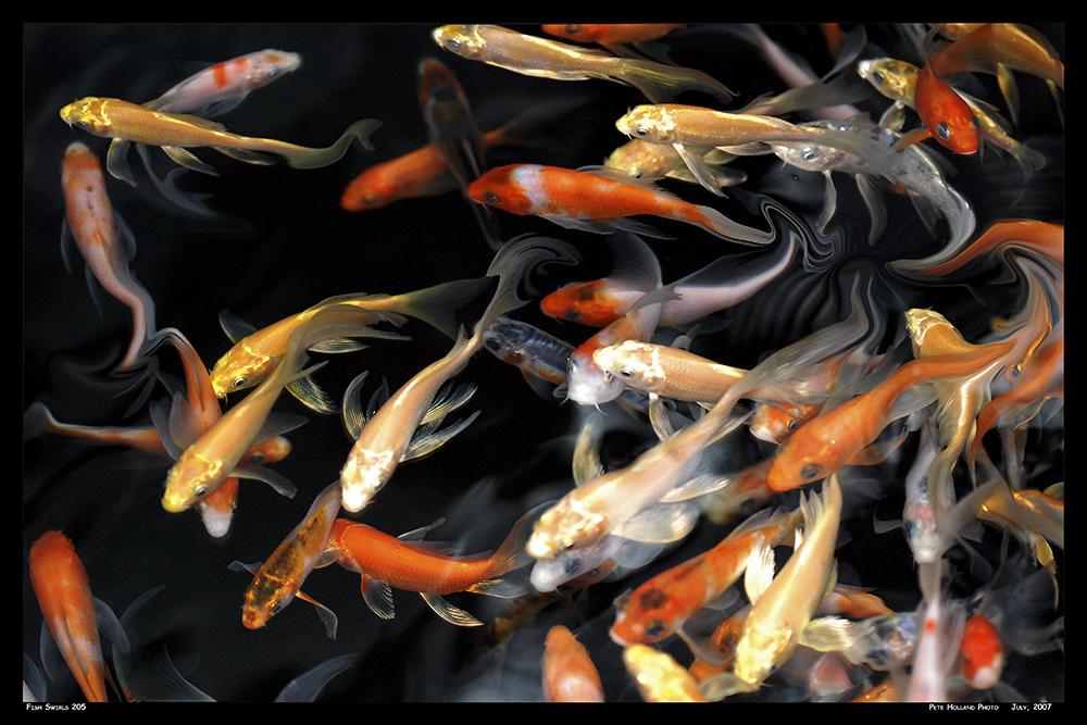 Fish Swirl