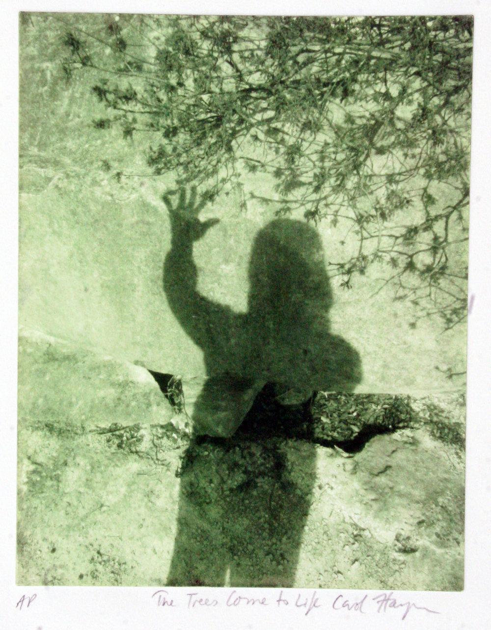 Carol Hayman: Trees Come to Life