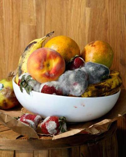 Roe Ethridge Old Fruit Print