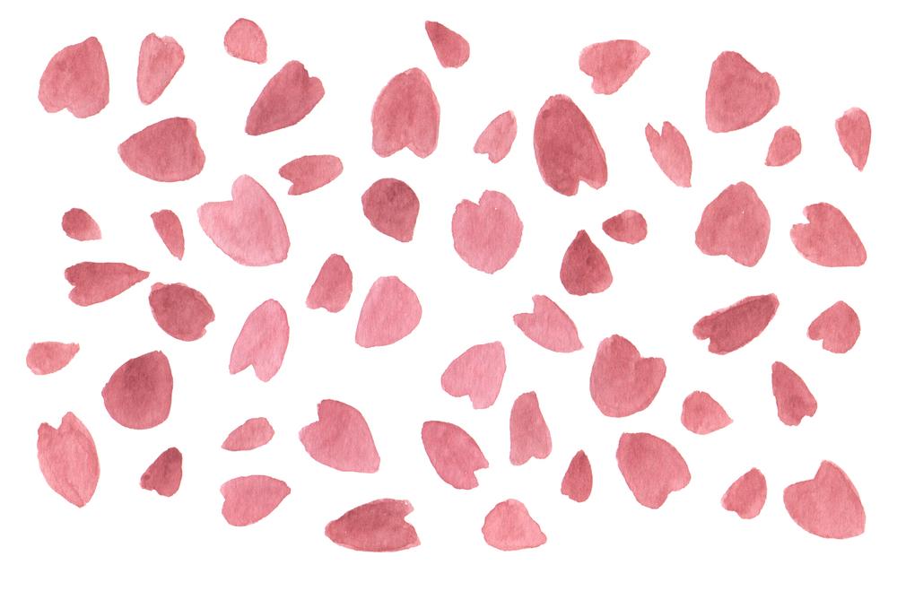 sakura_petals.jpg