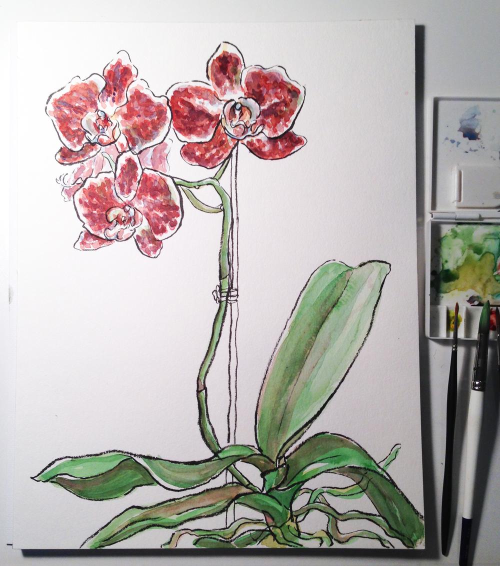 2_orchid.jpg