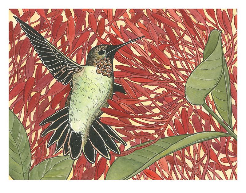 Hummingbird_800w.jpg