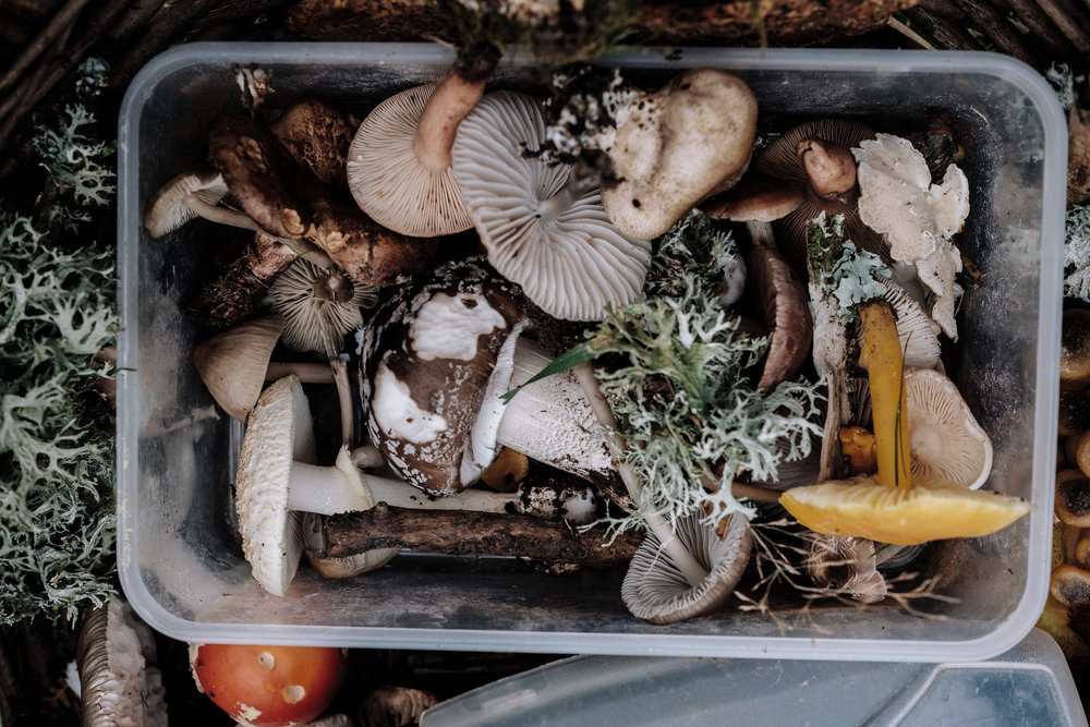 Food Waste. Image by Annie Spratt