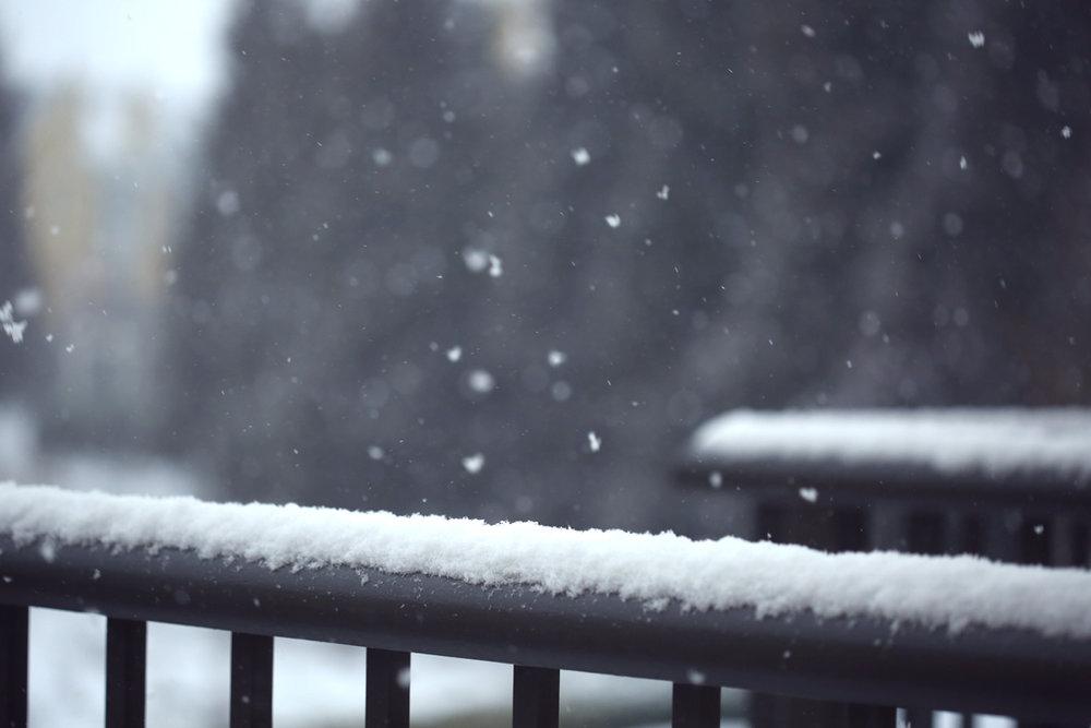 Lonesome Winter- NPIB