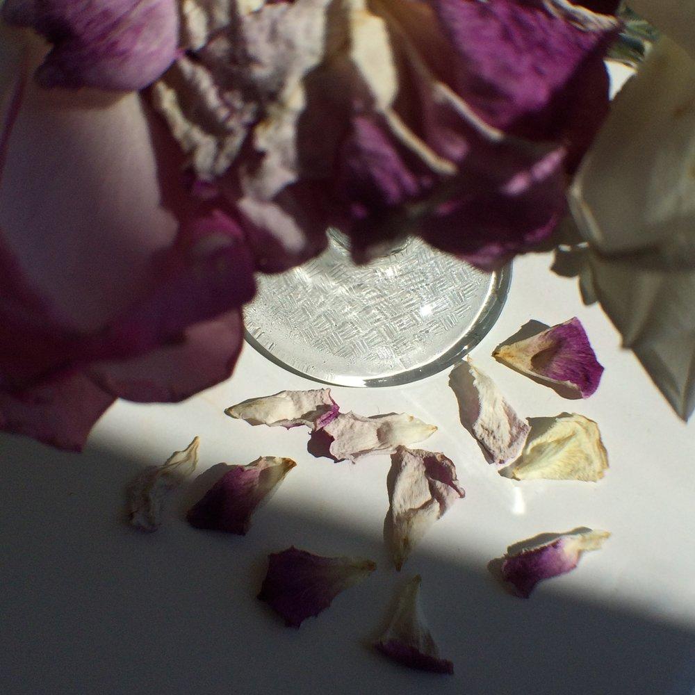 First Rose Garden- NPIB