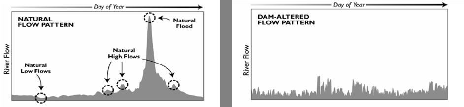 Caudales de flujo en un río para condiciones naturales y alteradas por una presa.