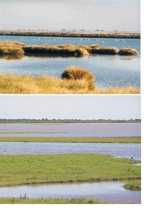 Figura 1. El Parque Nacional de Doñana es una de las reservas europeas de humedales más importantes y un sitio importante para las aves migratorias.