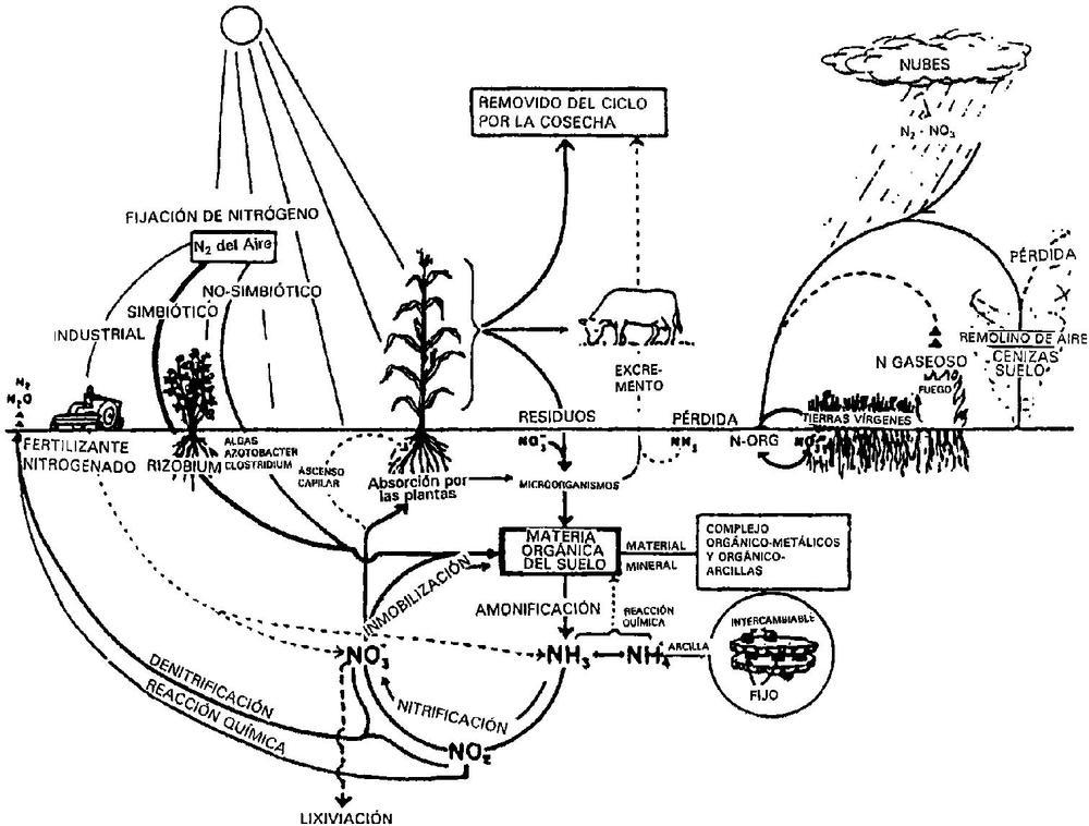 Fig. 2. Ciclo del Nitrógeno, Stevenson.