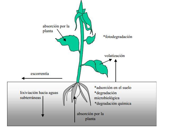 Fig. 3. Procesos que afectan a los plaguicidas.