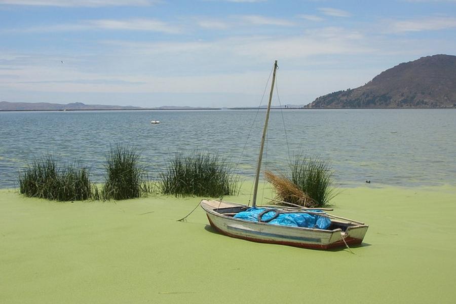Eutrofización del Lago Titicaca. Fuente: arellanojuan.com