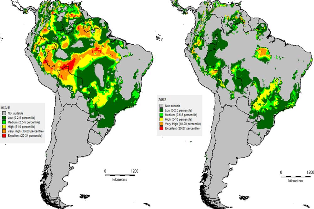 Modelo predictivo de la distribución de peces del grupo H. cochliodon en Sudamérica usando BIOCLIM (a. Distribución ecológica actual; b. Distribución ecológica al año 2052).