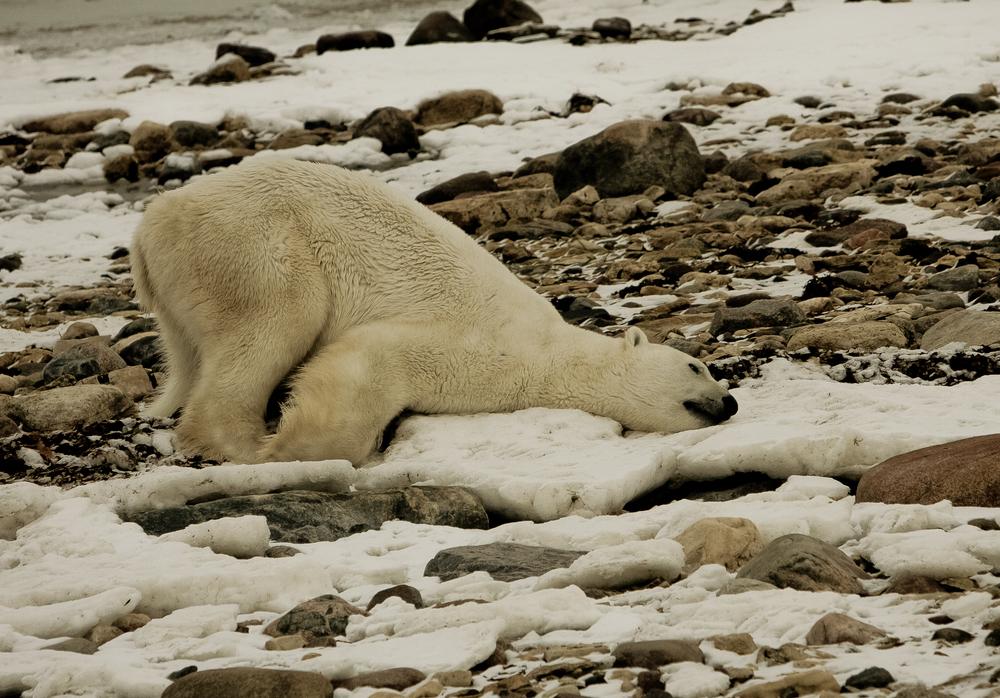 Polar_Quest-393.jpg
